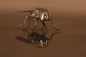 Huisvlieg winnaar in natuurfotowedstrijd