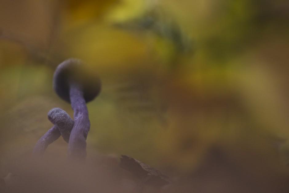 funghi-4