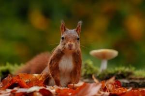 Eekhoorn in de herfst