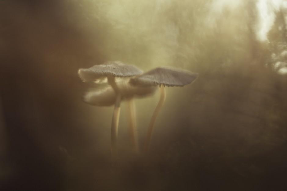 funghi-8