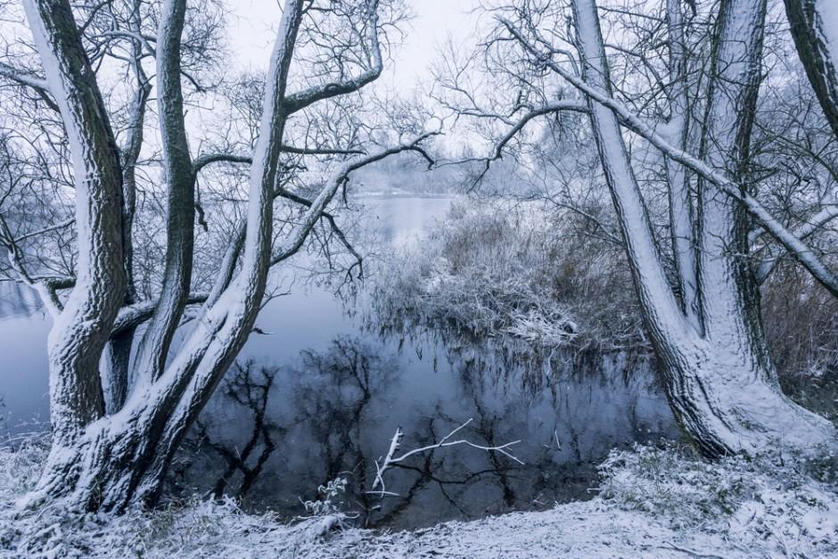 Sfeerinpressies van de Millingerwaard in de winter.