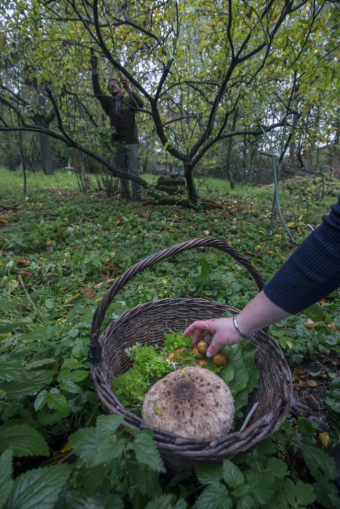 Voedselbos Sualmana in Swalmen (Limburg) is het oudste voedselbos van Nederland en aangelegd in 1995.