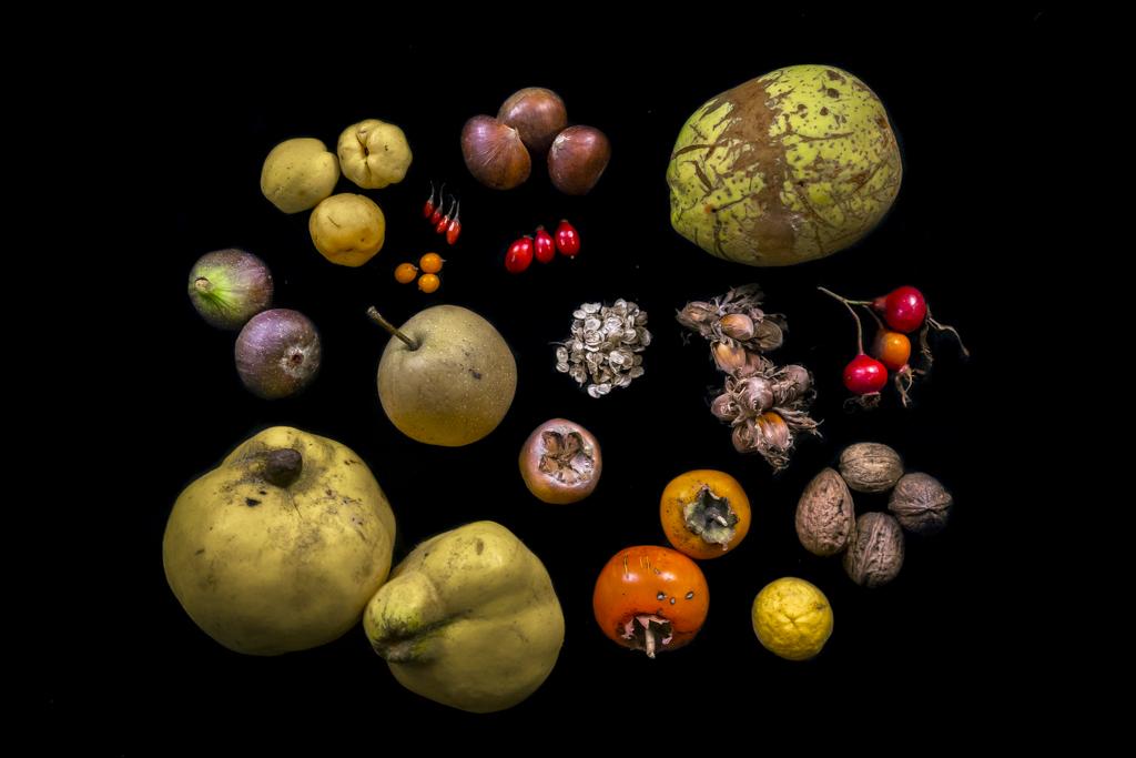 Stilleven van noten en zaden uit het voedselbos: Vijgen, Chinese- en Japanse kweepeer, Kaki, wilde citroen, mispel, duindoorn, rozenbottel
